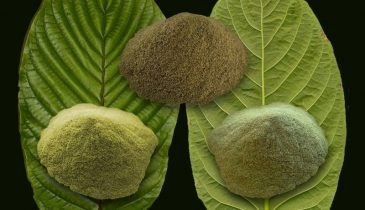 Things You Need to Know About Green Bali Kratom