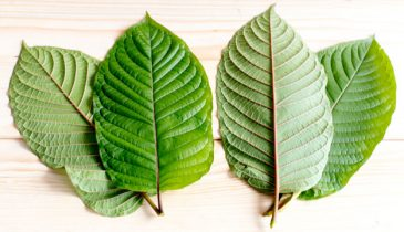 Know What to Take As the Best Kratom for Euphoria