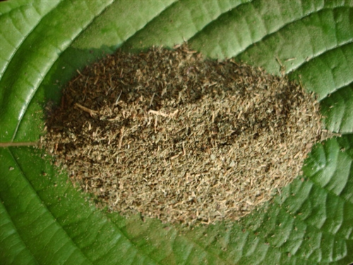 Kratom Questions: How Long Does Kratom Stay in Your System?
