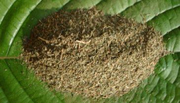 Kratom Sumatra Green Complete Usage Guide for Kratomites