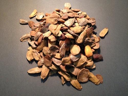 Akuamma Seeds: The Natural Analgesic and Anti-inflammatory