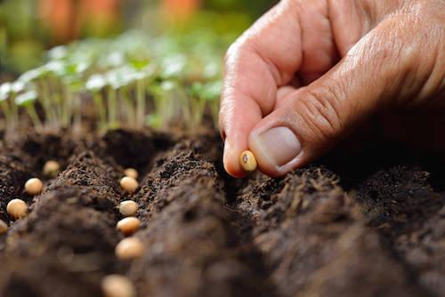 Buy Kratom Seeds: Challenge of Growing your own Kratom Tree