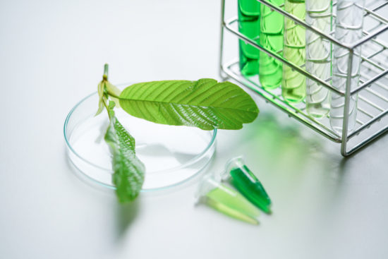 Can You Test for Kratom: Know the Possibilities