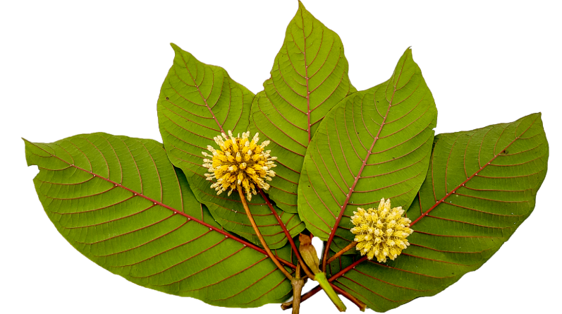 Red Vein Kratom: What Is It and How Can It Help You?